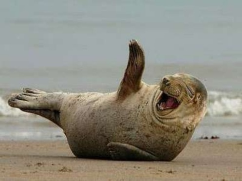 funny-animal-laughing-sea-lion-picture